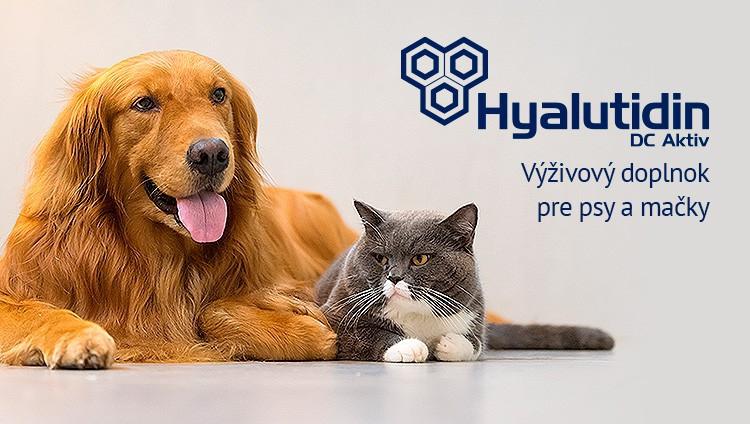 Hyalutidin psy a mačky